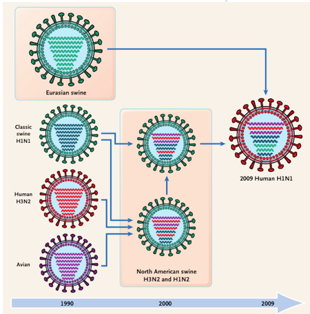Influenza Virus Subtypes reassortment of genome
