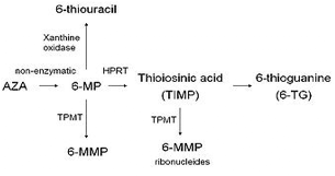 Thiopurine Methyltransferase Activity